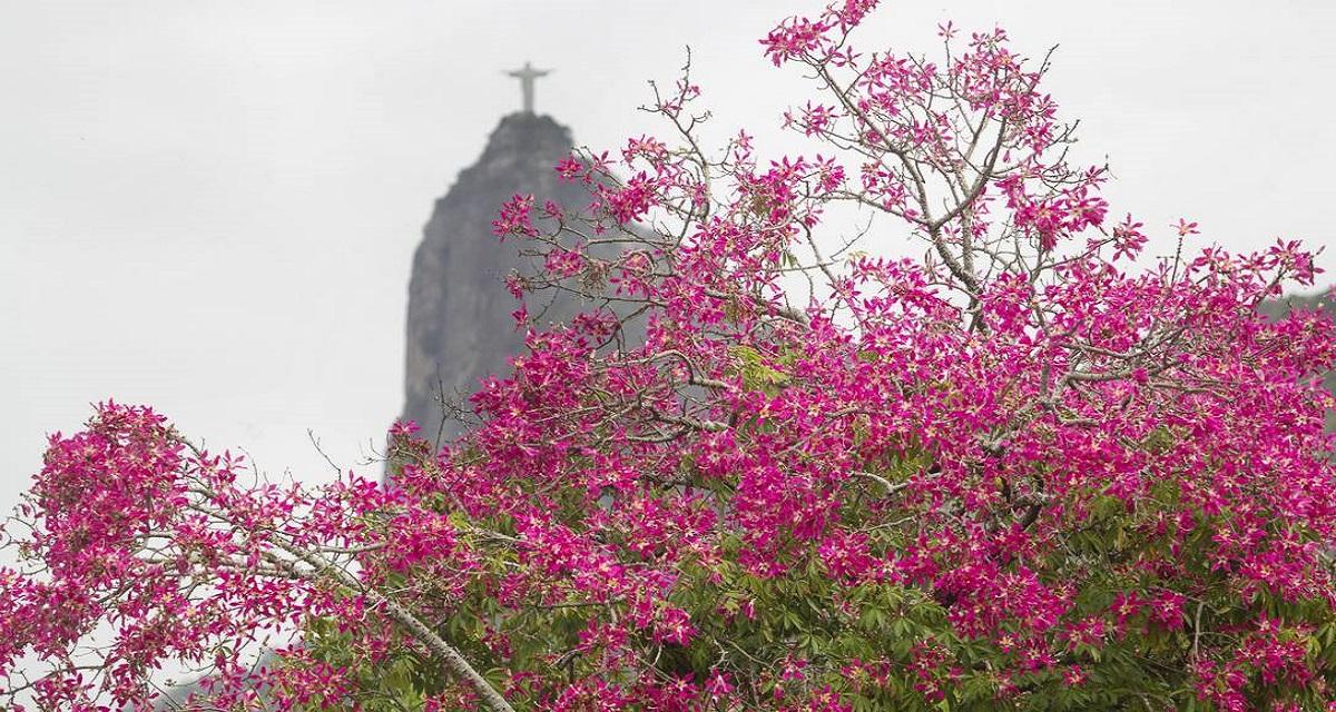 Outono no Rio de Janeiro Bogoricin Prime CAPA