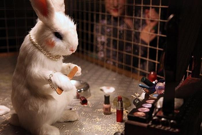 Testes de consmeticos com animais CAPA Bogoricin Prime