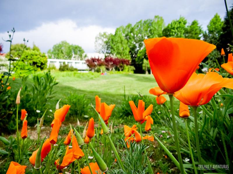Flores ao redor do Hotel Quinta das Lágrimas, em Coimbra
