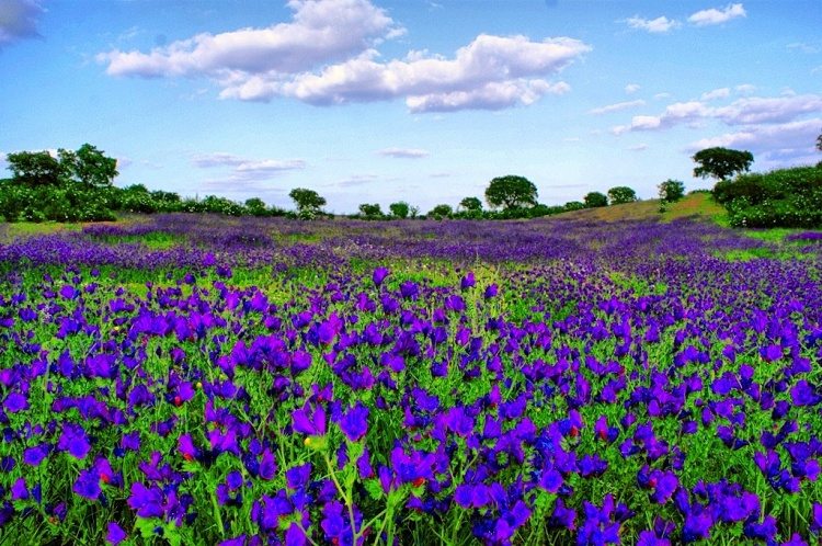 Primavera em portugal Bogoricin Prime Interna