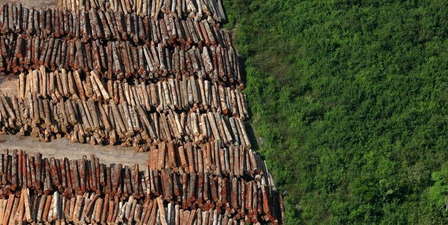 Desmatamento da Amazonia CAPA Bogoricin Prime